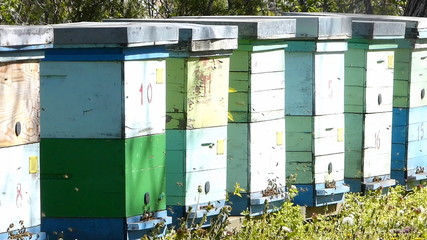 Beekeeping, bees and hives in the orchard