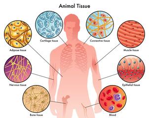 tessuti animali
