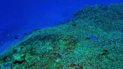 Kerama Islands coral and tropical fish in Okinawa, Japan.