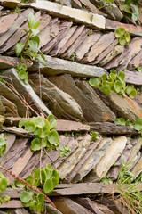 Garden wall built with slate stacked diagonally