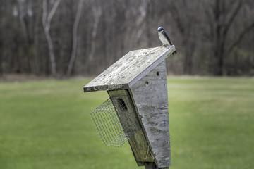 Swallows on a birdhouse