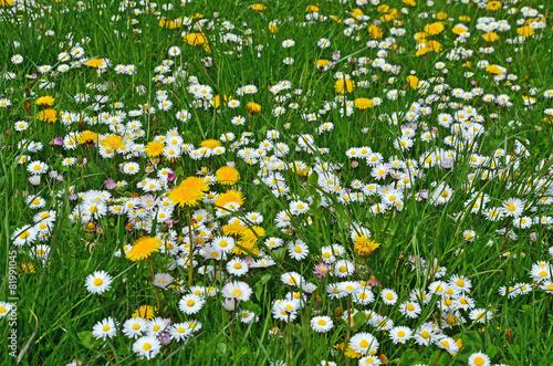 Foto op Plexiglas Paardebloem bunte blumenwiese, gras