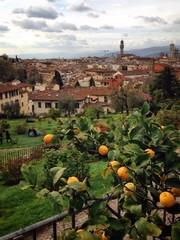 Lemon tree aganst Florence cityscape