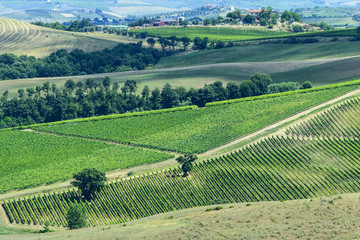 Maremma (Tuscany), landscape at summer