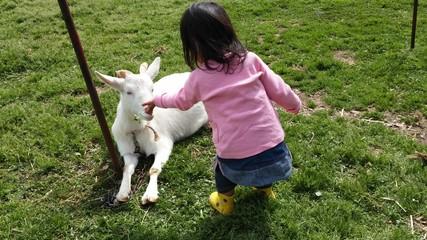 白山羊にクローバーをあげる少女