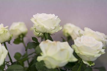 Blumenstrauß mit weißen Rosen