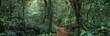 jungle - 81994429