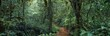 Leinwanddruck Bild - jungle
