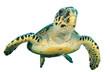 Hawksbill Sea Turtle isolated on white