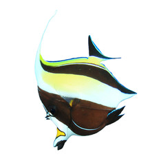 Moorish Idol fish isolated on white background