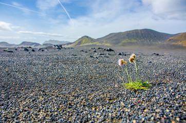 Desert in Landmannalaugar - Amazing Landscape in Iceland