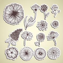 stylish beautiful  flower set sticker background concept