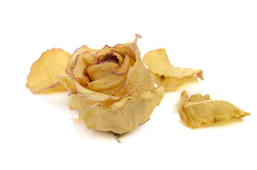 Dried roses and petal on white background