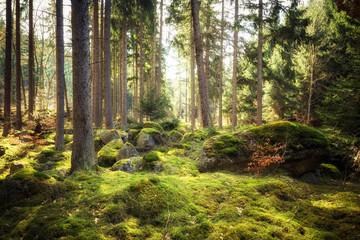 In aller Frische - Wälder nach dem Winter