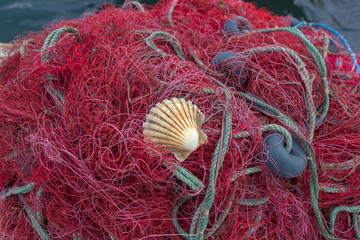 Fishing nets with shell
