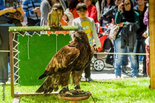 Fotobehang Eagle eagle