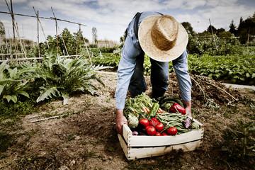 Farmer with organic food