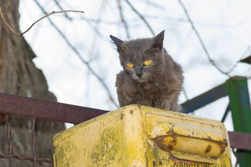 Alien cat with yellow eyes sitting on a yellow letter-box