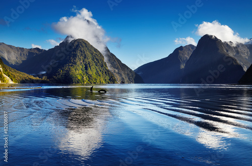 Fotobehang Oceanië Milford Sound, New Zealand