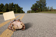 Toad on the Road - 82011252