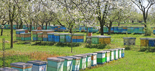 Papiers peints Bee Beekeeping, beehives in the blooming cherry orchard