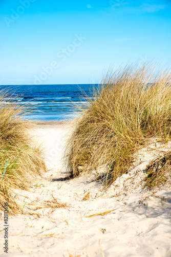 Dune at the Baltic Sea, North of Germany - 82013696