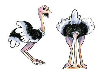Two funny Ostriches