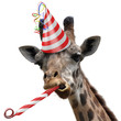 Leinwanddruck Bild - Funny giraffe party animal making a silly face