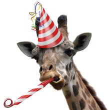 "Постер, картина, фотообои ""Funny giraffe party animal making a silly face"""