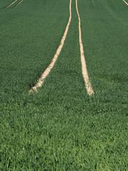 Fahrspuren im Getreidefeld