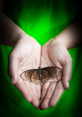 Dead butterfly in lady hand, green earth concept