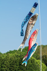 Koi Fish Flags for Boy's Day