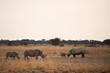 Постер, плакат: Deserto del Kalahari Botswana Africa