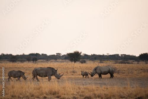 Staande foto Neushoorn Deserto del Kalahari, Botswana, Africa