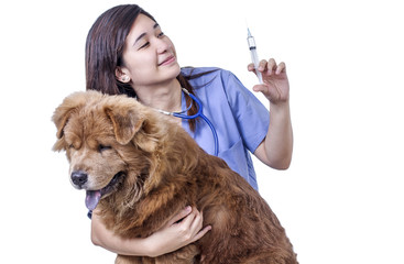 Injection For A Sick Dog
