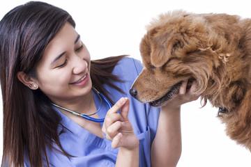 Dog Medical Treatment