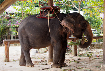 Elephant camp in Koh Chang, Thailand