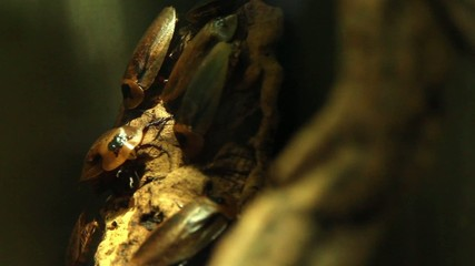 Moving cockroaches in a terrarium.