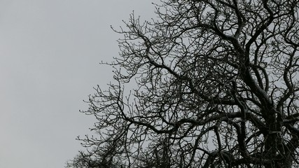 Tree in the stormy weather
