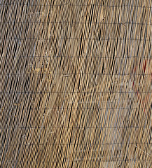 texture of large bamboo canes entwined with each other