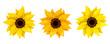 Set of three sunflowers. Vector illustration. - 82043647