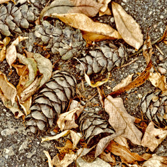 Leaves and pine cones on the ground
