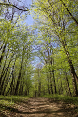 Green forest on a sunny day.