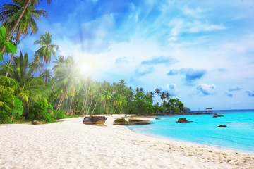 Palm trees in tropical perfect beach