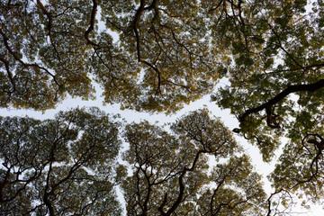 India, Cochin rivière de branches 2719