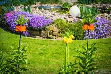 Kaiserkronen im Garten