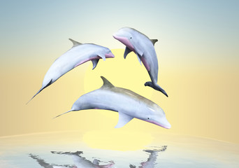 Dolphins against a background of the sunset.
