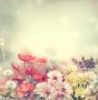 Leinwanddruck Bild - Colorful Flowers