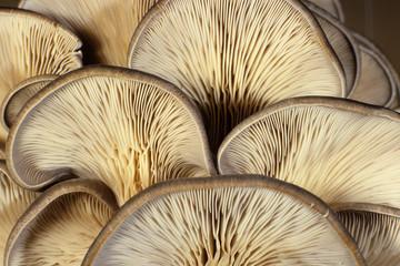 funghi prodotti del sottobosco