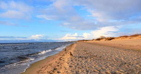 Beautiful ducks at the Baltic sea beach, 4k